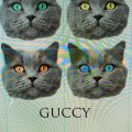 The real GUCCY cat !!!!